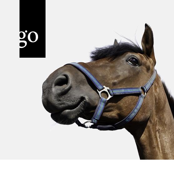 Immer wieder Husten? Wissen für Pferdehalter