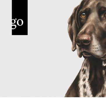 Die Happydog Online-Seminare