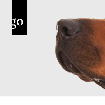 Der Ethik-Kodex der deutschen Tierärzteschaft – Spiegelbild des Wertewandels der Mensch-Tier-Beziehung