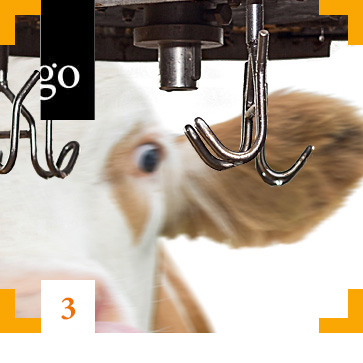Modul 3: Tierschutz bei der Schlachtung: Betäubung und Entblutung im Fokus