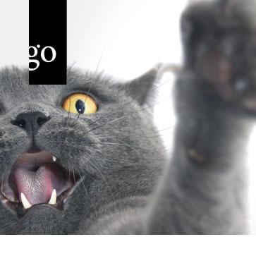Wie röntge ich die Zähne bei Hund und Katze effektiv?