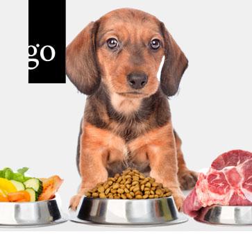 Unter die Lupe genommen: BARF, Homemade Diets und andere Trends in der Ernährung von Hund und Katze