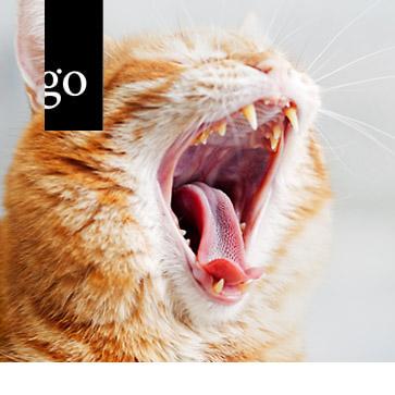 Orale und parodontale Probleme bei der Katze