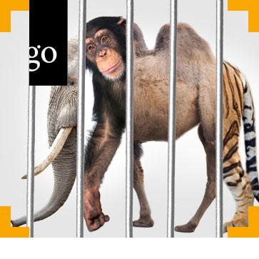 Wildtiere in menschlicher Obhut: Tierschutz und amtstierärztliche Aufgaben