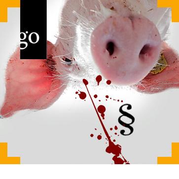 Tierschutz im Schlachtbetrieb: Unternehmerverantwortung vom Abladen über Betäubung und Entblutung