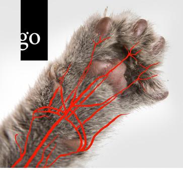 Blutdruckmessung bei Katzen mittels Doppler-Verfahren