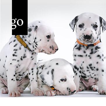 Reproduktionsmedizin in der Hundezucht