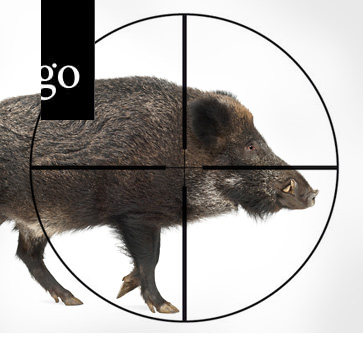 Die Afrikanische Schweinepest – Gerüstet für den Ernstfall!