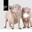 Digitaler Düsseldorfer Schweinetag