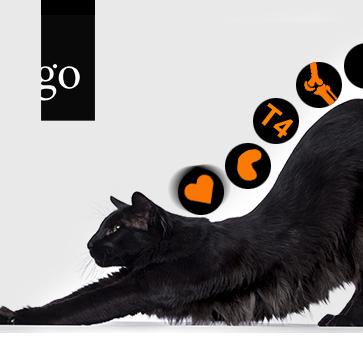 Management des multimorbiden Katzenpatienten
