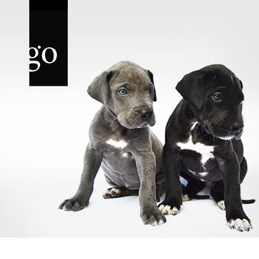 Neonatologie in der Hundezucht