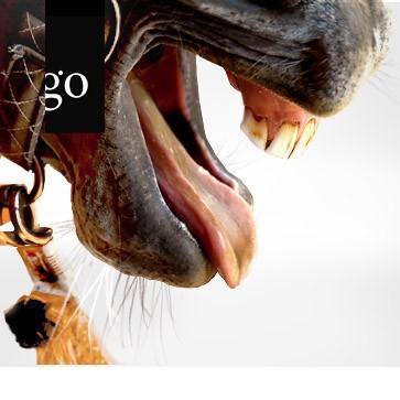 Dysphagie beim Pferd