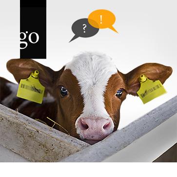 Frag den Experten: Antibiotikaeinsatz in der Großtierpraxis
