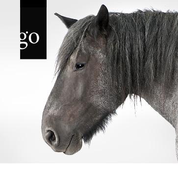 Alte Pferde bedarfsgerecht ernähren