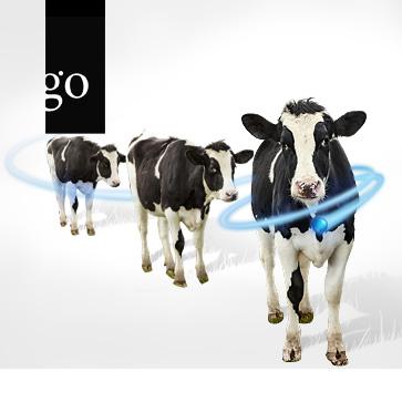 Frag die Experten: Thema Rindergrippe