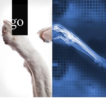 Die Bildwelt des digitalen Röntgens in der tierärztlichen Praxis
