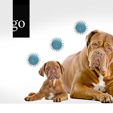 Update Canine Herpesimpfung in der Hundezucht
