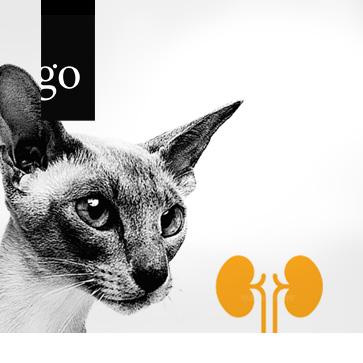 Eine Nierenerkrankung kommt selten allein! Tipps für die Kleintierpraxis