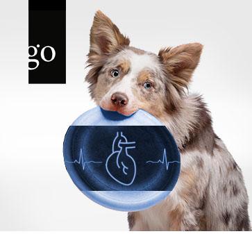 """Der Hund mit Herzinsuffizienz – das richtige """"Rezept"""" für Ihr Patientenmanagement"""