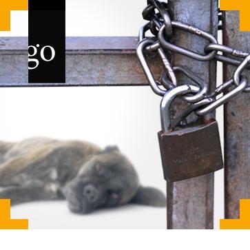 Tierhaltungsverbote – wie geht es weiter?