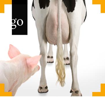 Tierschutz bei landwirtschaftlichen Nutztieren