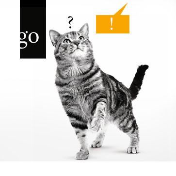Zum Wohle der Katze: Richtig kommunizieren