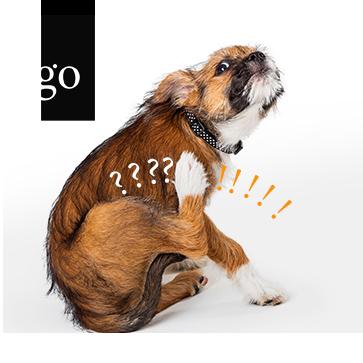 7 + 4: Was wissen wir heute nach mehrjährigem Einsatz von Apoquel und Cytopoint?