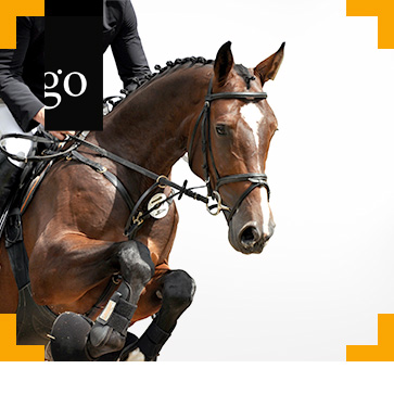Überwachung von Pferdesportveranstaltungen - eine Aufgabe des Amtstierarztes?