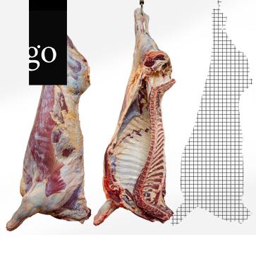 Einheitliche Befundung und Bewertung am Schlachthof – Schlachtkörper des Rindes