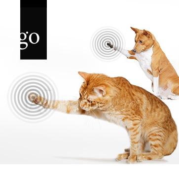 Frag die Experten: Osteoarthrose bei Hund und Katze