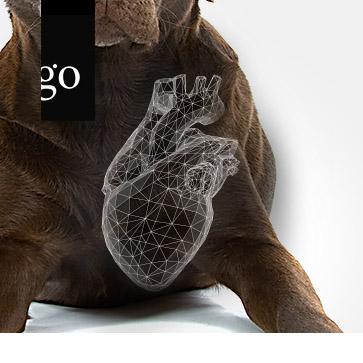Herzinsuffizienz beim Hund – was ist neu in 2021?