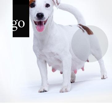 Wissenswertes zu Zyklusstörungen und Gebärmuttererkrankungen in der Hundezucht
