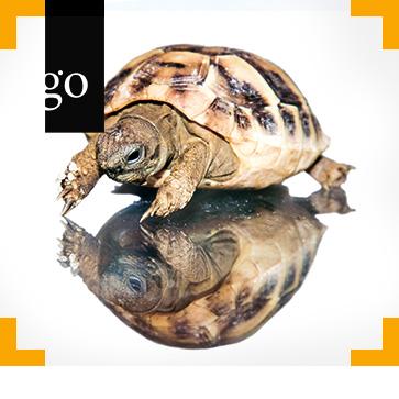 Beurteilung von Reptilienhaltungen unter Verhaltensaspekten - Teil 1